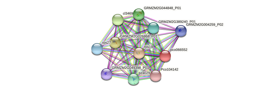 pco066552 protein (Zea mays) - STRING interaction network