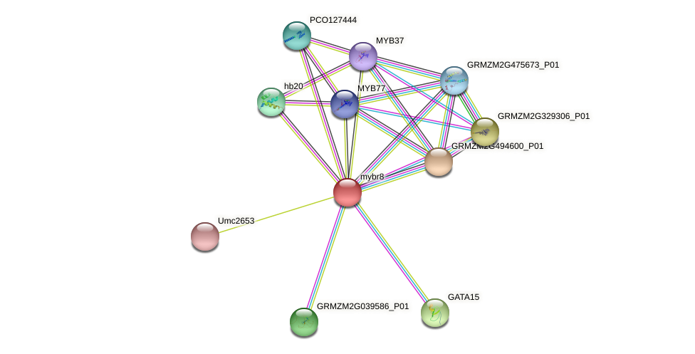 mybr8 protein (Zea mays) - STRING interaction network
