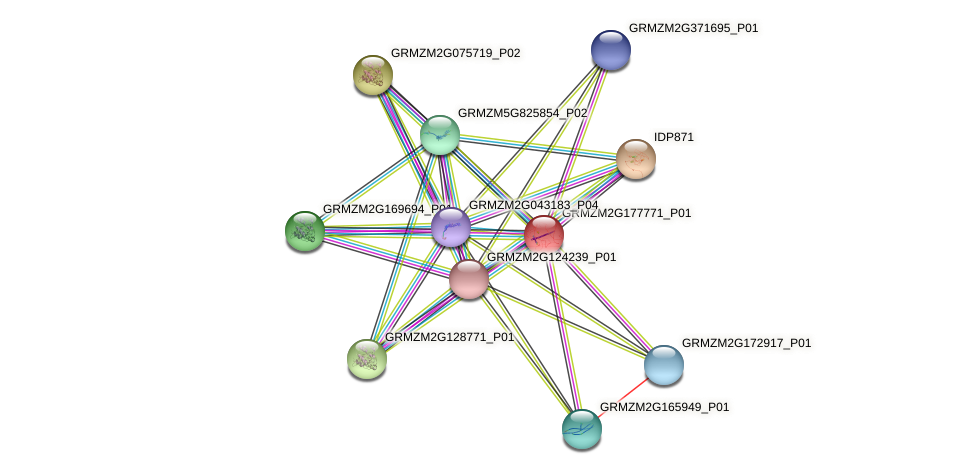 Zm.24160 protein (Zea mays) - STRING interaction network