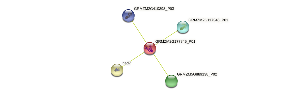 Zm.130174 protein (Zea mays) - STRING interaction network
