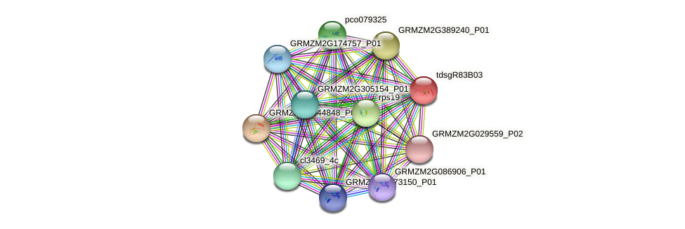 GRMZM2G177862_P01 protein (Zea mays) - STRING interaction network