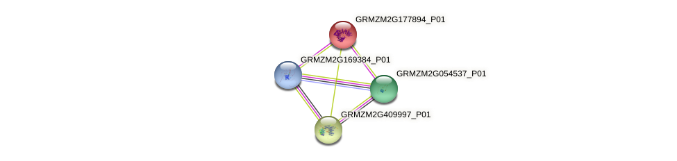 GRMZM2G177894_P01 protein (Zea mays) - STRING interaction network