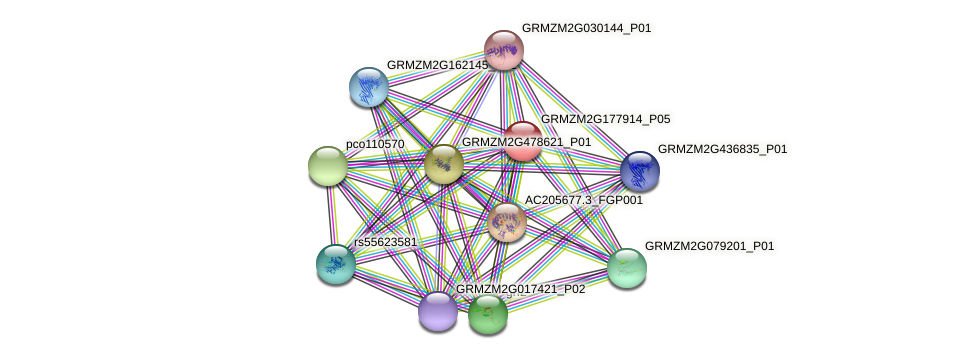 GRMZM2G177914_P05 protein (Zea mays) - STRING interaction network