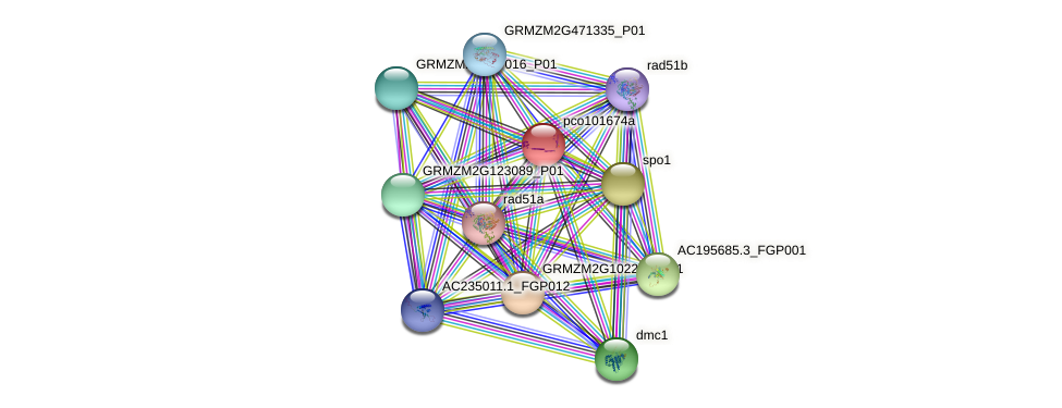pco101674a protein (Zea mays) - STRING interaction network