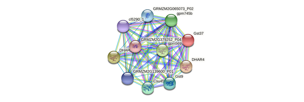 gst37 protein (Zea mays) - STRING interaction network