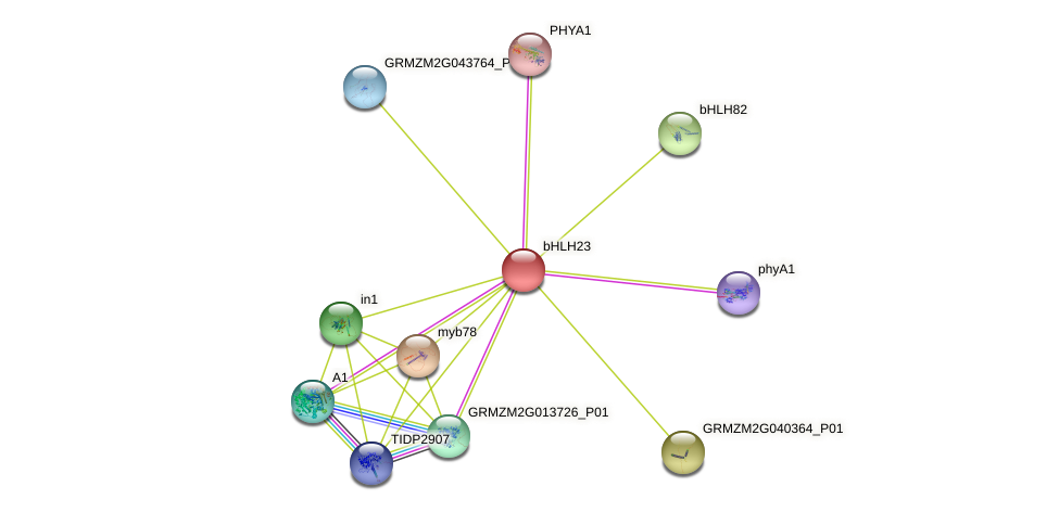 bHLH23 protein (Zea mays) - STRING interaction network