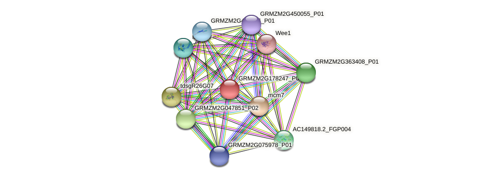 Zm.93083 protein (Zea mays) - STRING interaction network
