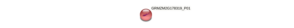 GRMZM2G178319_P01 protein (Zea mays) - STRING interaction network