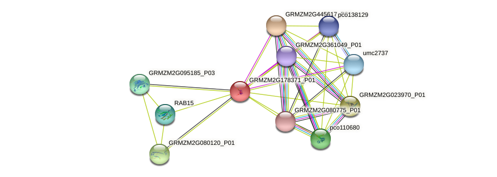 GRMZM2G178371_P01 protein (Zea mays) - STRING interaction network