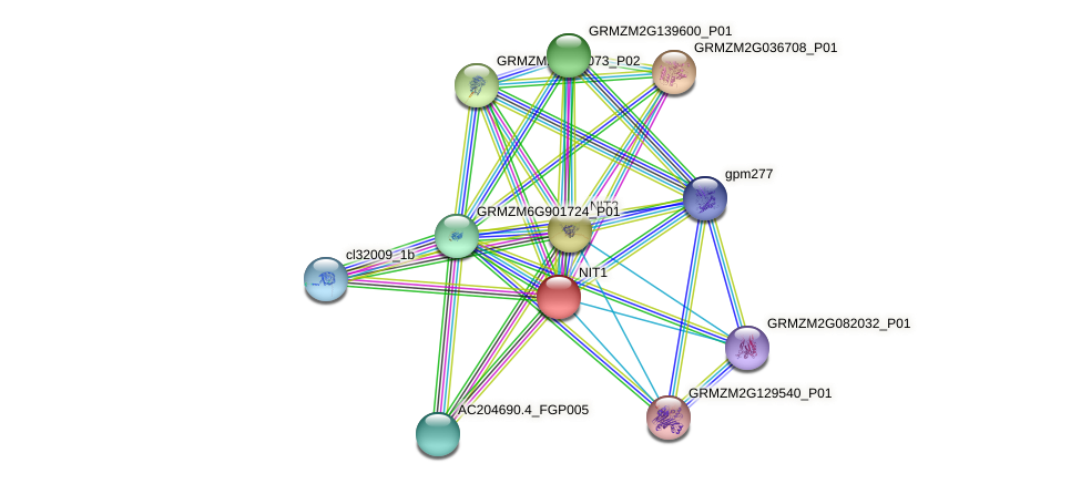 NIT1 protein (Zea mays) - STRING interaction network