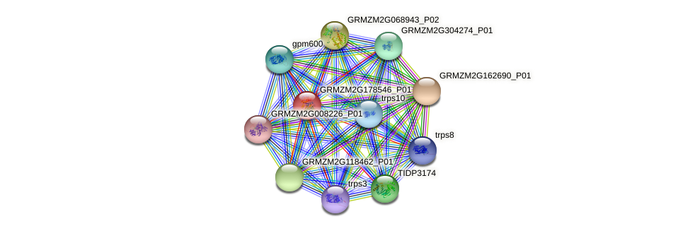 GRMZM2G178546_P01 protein (Zea mays) - STRING interaction network