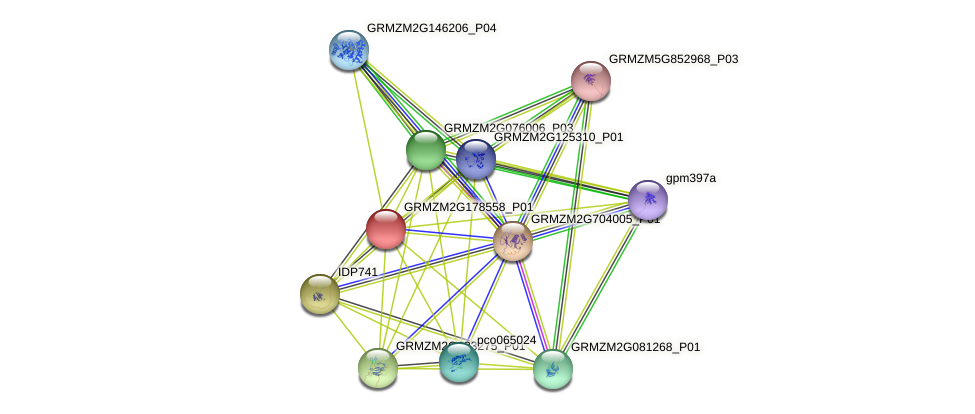 GRMZM2G178558_P01 protein (Zea mays) - STRING interaction network