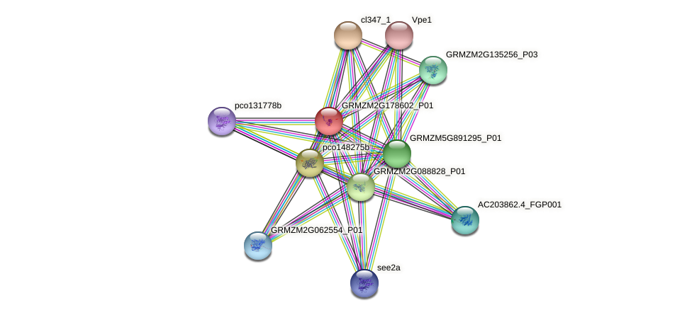 GRMZM2G178602_P01 protein (Zea mays) - STRING interaction network