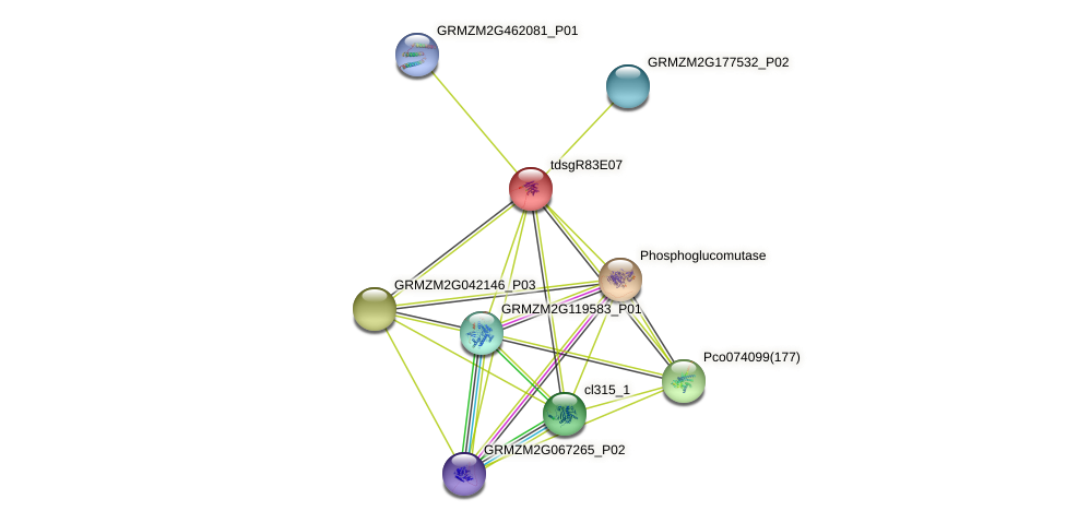 Zm.61179 protein (Zea mays) - STRING interaction network