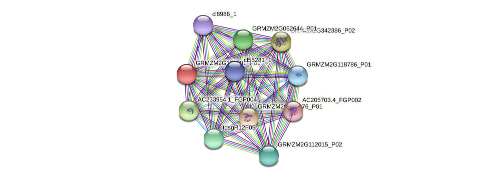 GRMZM2G178801_P01 protein (Zea mays) - STRING interaction network