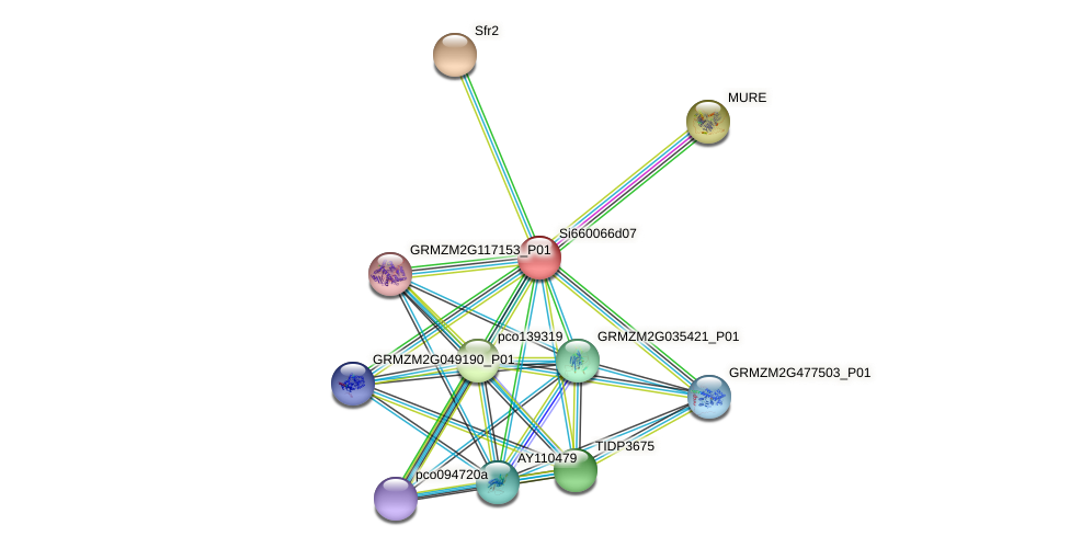GRMZM2G178892_P01 protein (Zea mays) - STRING interaction network