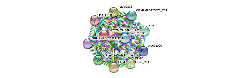 GRMZM2G178942_P01 protein (Zea mays) - STRING interaction network