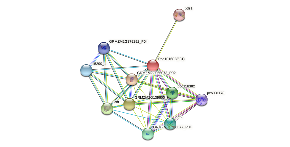GRMZM2G178958_P01 protein (Zea mays) - STRING interaction network