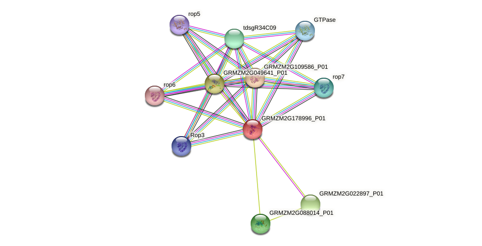 Zm.21485 protein (Zea mays) - STRING interaction network