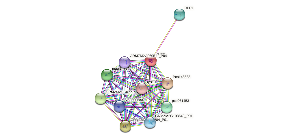 ZCN8 protein (Zea mays) - STRING interaction network