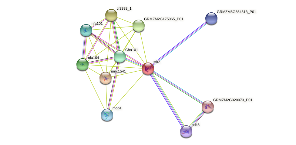GRMZM2G179268_P01 protein (Zea mays) - STRING interaction network