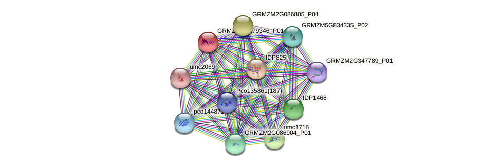 GRMZM2G179346_P01 protein (Zea mays) - STRING interaction network