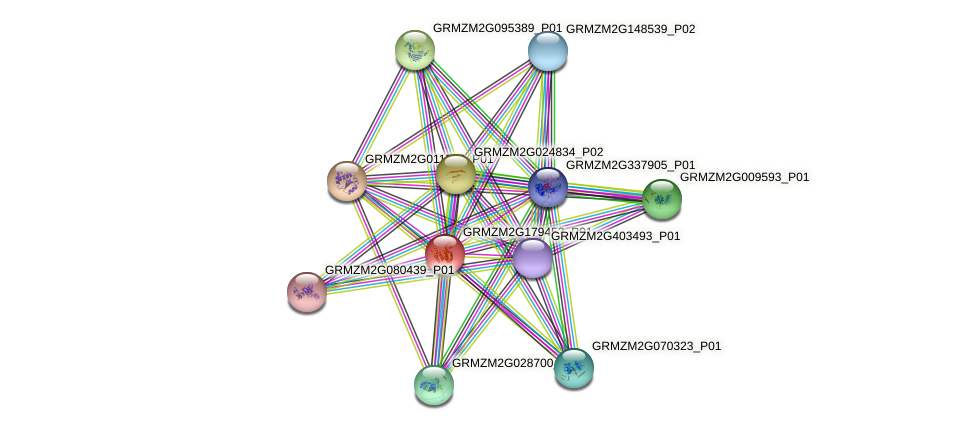 GRMZM2G179452_P01 protein (Zea mays) - STRING interaction network