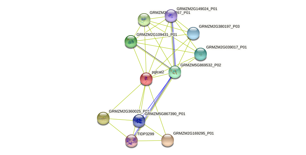 pglcat2 protein (Zea mays) - STRING interaction network
