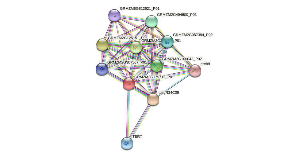 GRMZM2G179715_P01 protein (Zea mays) - STRING interaction network