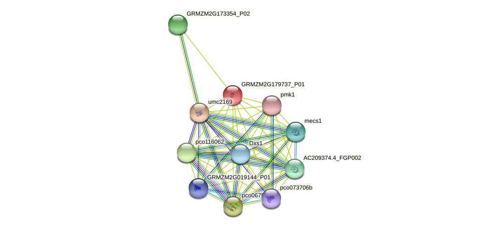 GRMZM2G179737_P01 protein (Zea mays) - STRING interaction network