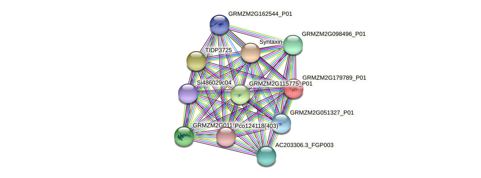 GRMZM2G179789_P01 protein (Zea mays) - STRING interaction network