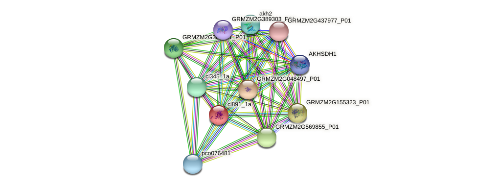 cl891_1a protein (Zea mays) - STRING interaction network