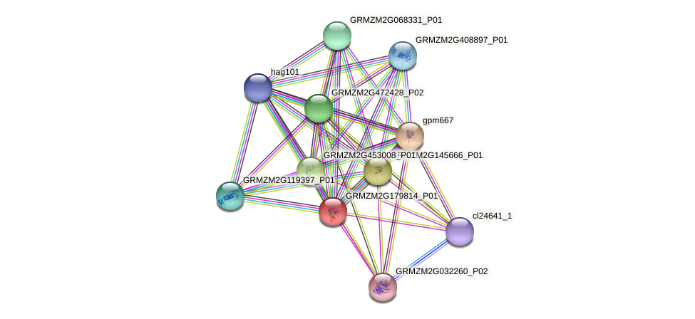 GRMZM2G179814_P01 protein (Zea mays) - STRING interaction network