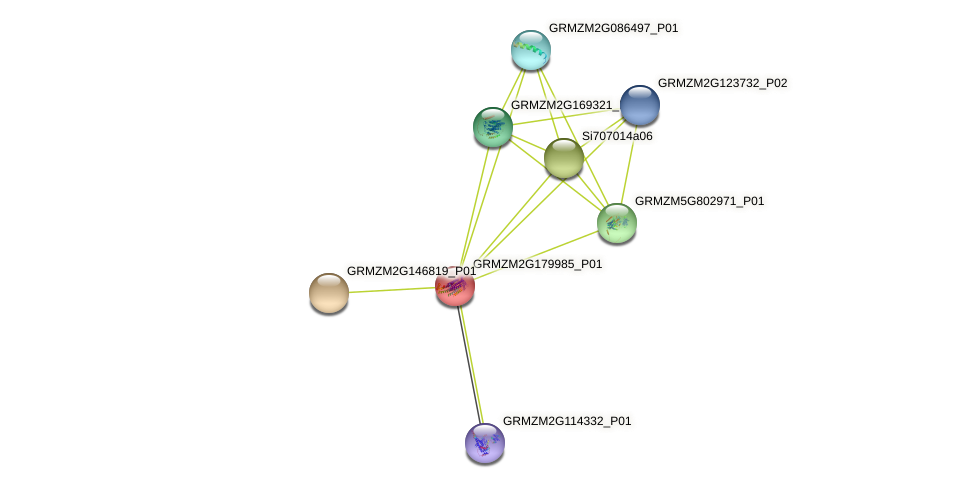 Zm.72725 protein (Zea mays) - STRING interaction network