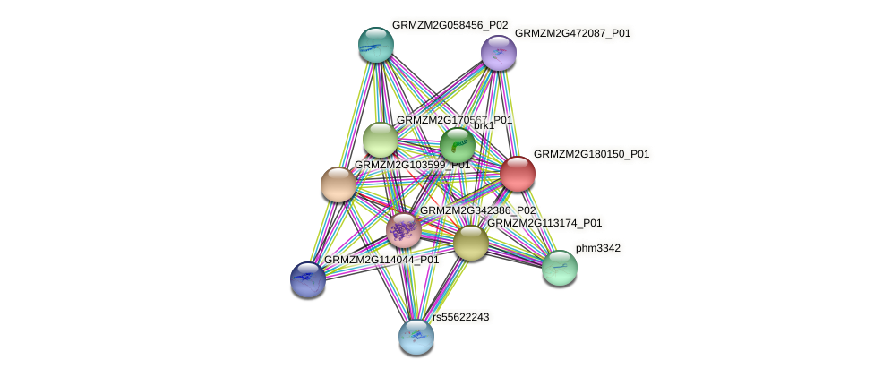 GRMZM2G180150_P01 protein (Zea mays) - STRING interaction network