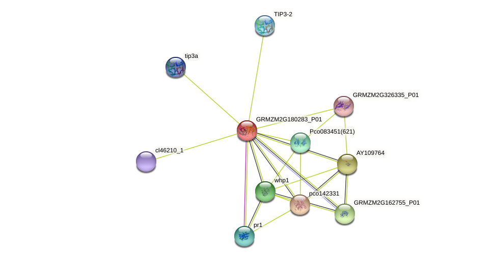 GRMZM2G180283_P01 protein (Zea mays) - STRING interaction network