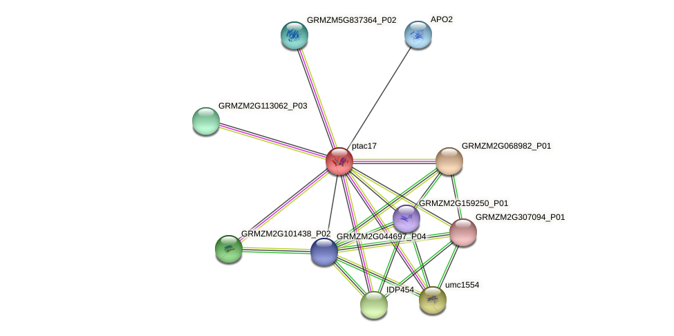 Zm.25128 protein (Zea mays) - STRING interaction network