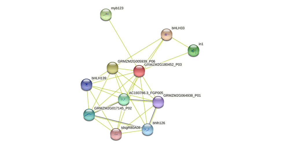 100381413 protein (Zea mays) - STRING interaction network
