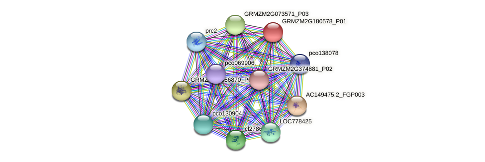 GRMZM2G180578_P01 protein (Zea mays) - STRING interaction network