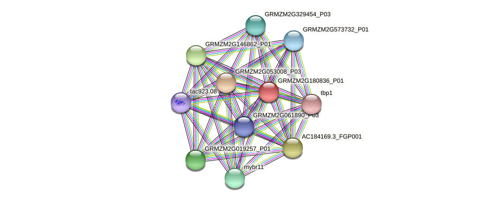 GRMZM2G180836_P01 protein (Zea mays) - STRING interaction network