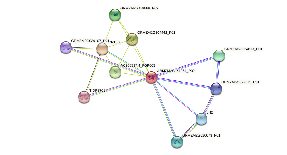 GRMZM2G181231_P02 protein (Zea mays) - STRING interaction network