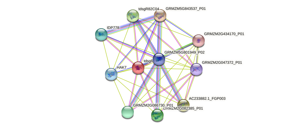 tdsgR01D03 protein (Zea mays) - STRING interaction network