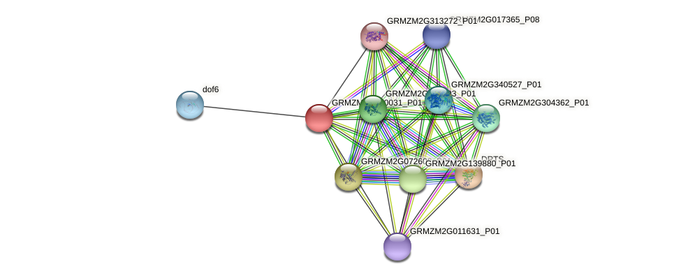 GRMZM2G300031_P01 protein (Zea mays) - STRING interaction network