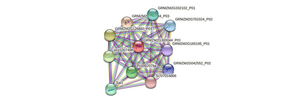 GRMZM2G300044_P01 protein (Zea mays) - STRING interaction network