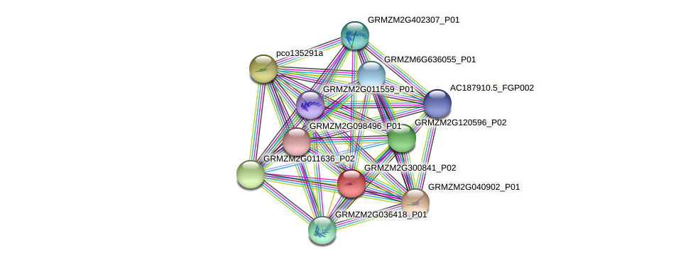 GRMZM2G300841_P02 protein (Zea mays) - STRING interaction network