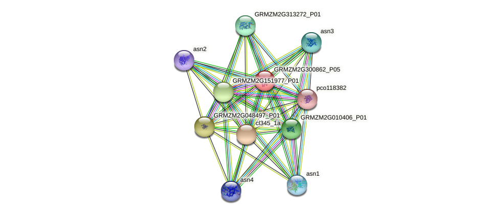 GRMZM2G300862_P05 protein (Zea mays) - STRING interaction network