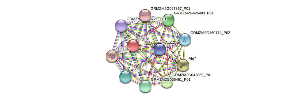 GRMZM2G301031_P01 protein (Zea mays) - STRING interaction network