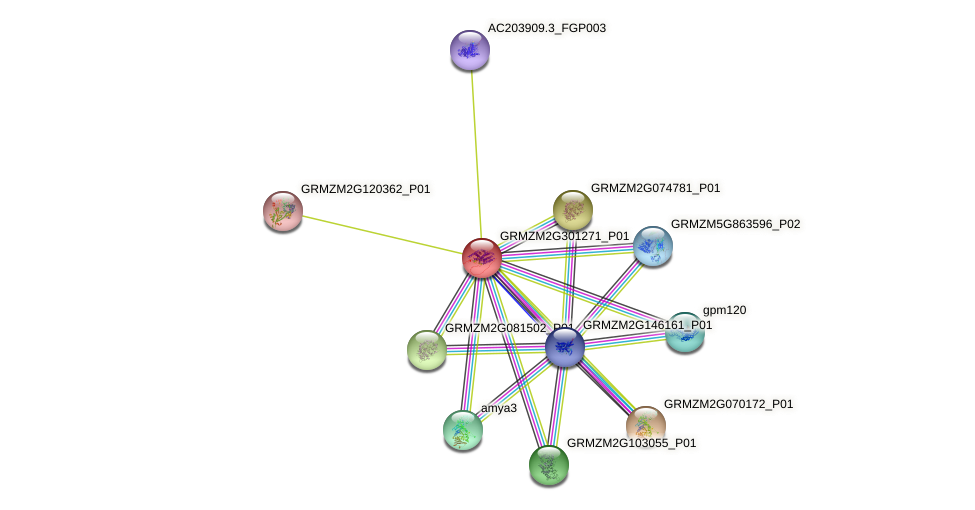 GRMZM2G301271_P01 protein (Zea mays) - STRING interaction network