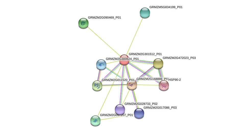 GRMZM2G301512_P01 protein (Zea mays) - STRING interaction network