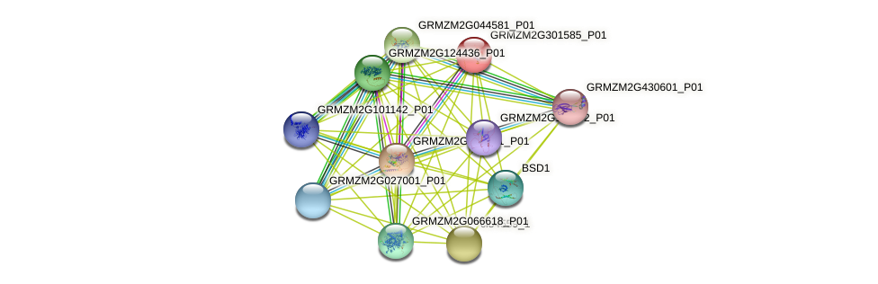 GRMZM2G301585_P01 protein (Zea mays) - STRING interaction network